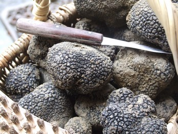 Truffe noire fraîche et en conserve en direct du domaine